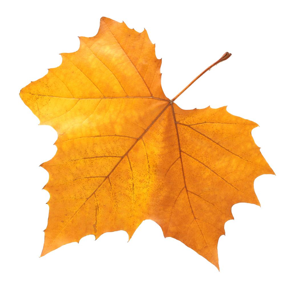 Alerta: Não confunda as alergias de Outono com os sintomas do coronavírus